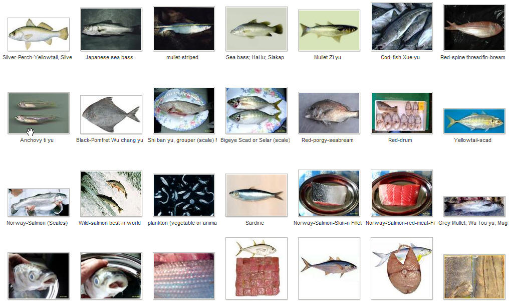 Fish with scales and fins list driverlayer search engine for List of fish with fins and scales